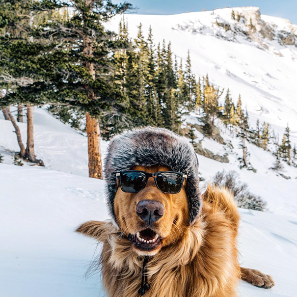 traveling-dog-aspen-the-mountain-pup-instagram-67